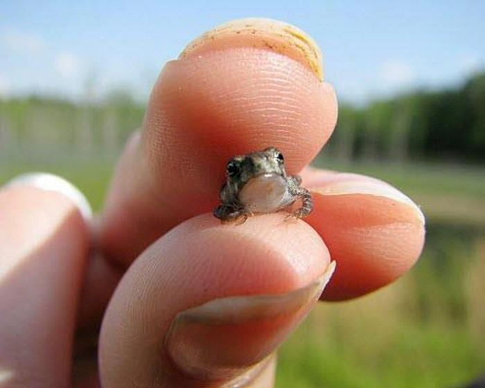 smaller is always cuter 10 pictures 13