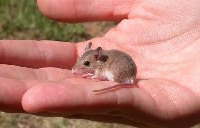 smaller is always cuter 10 pictures 21