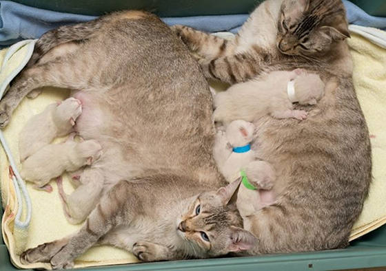 story of a rescue from neglected and dirty to mother of 15 adorable kittens 9 pictures 2