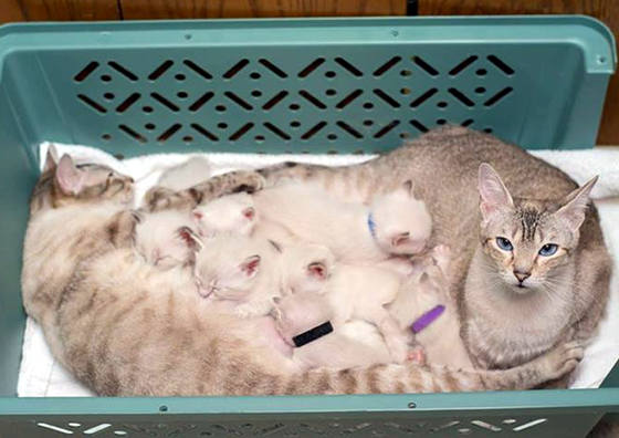 story of a rescue from neglected and dirty to mother of 15 adorable kittens 9 pictures 3
