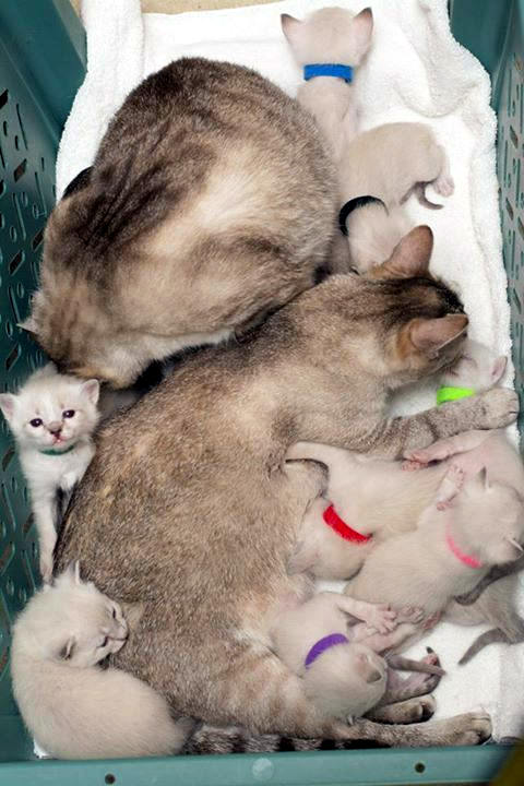 story of a rescue from neglected and dirty to mother of 15 adorable kittens 9 pictures 4