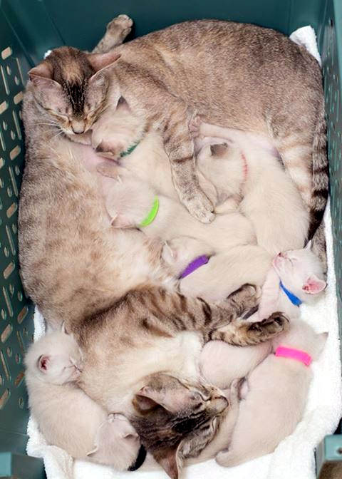 story of a rescue from neglected and dirty to mother of 15 adorable kittens 9 pictures 6