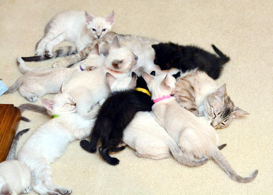 story of a rescue from neglected and dirty to mother of 15 adorable kittens 9 pictures 9