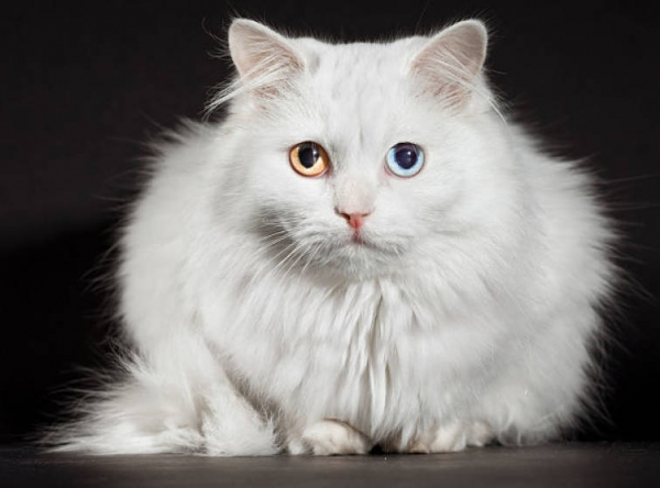 story of cat perfection 10 pictures 3