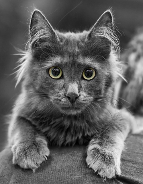 story of cat perfection 10 pictures 4