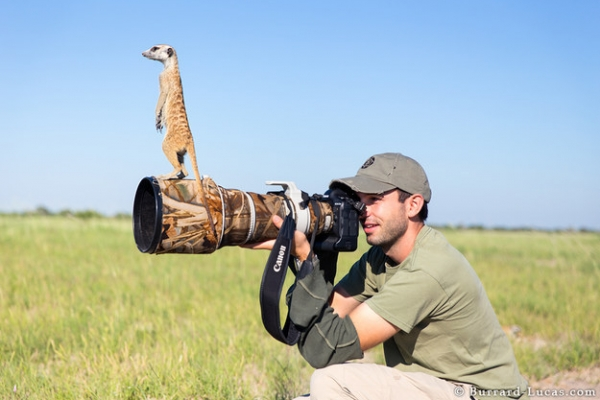story of will and the meerkats 6