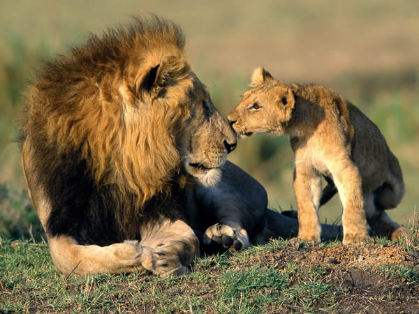 the african animals dangerous and unique gems of nature 8 pictures 4