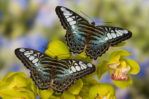 the breathtaking colors of the most beautiful butterflies  17 pictures 7