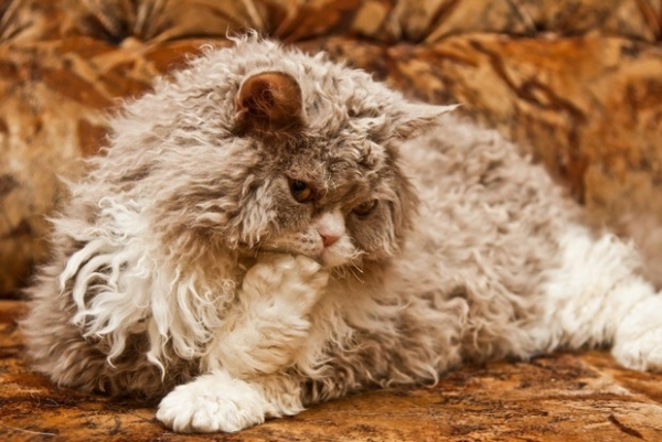 the cat in sheeps clothing 10 pictures 3