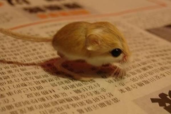 the cuteness is overwhelming in these 16 tiny animals 10
