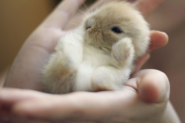 the cuteness is overwhelming in these 16 tiny animals 12