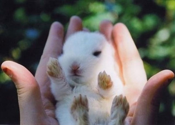 the cuteness is overwhelming in these 16 tiny animals 13