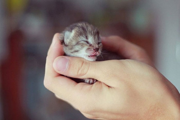 the cuteness is overwhelming in these 16 tiny animals 9