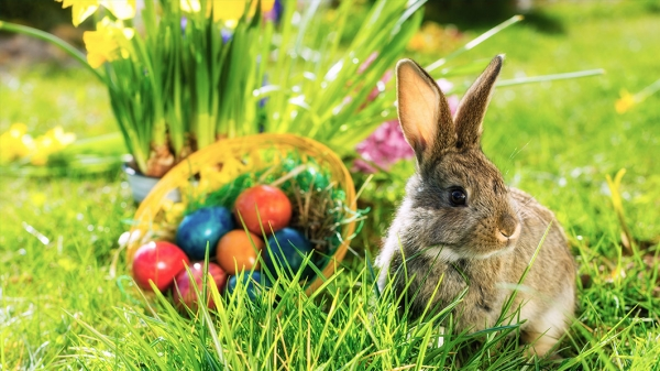 the history of the easter bunny 10 pictures 3