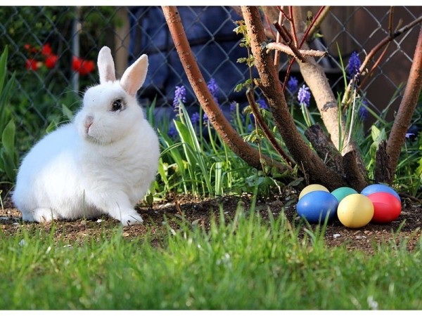 the history of the easter bunny 10 pictures 4
