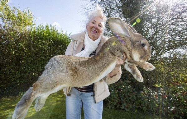 the history of the easter bunny 10 pictures 7