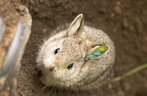 the history of the easter bunny 10 pictures 9