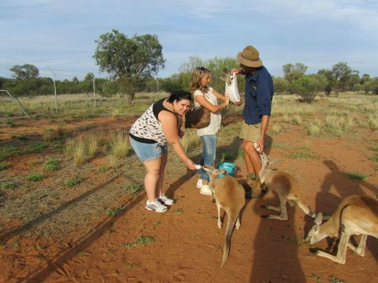 the kangaroo sanctuary that will restore your faith in humanity 12 pics 2