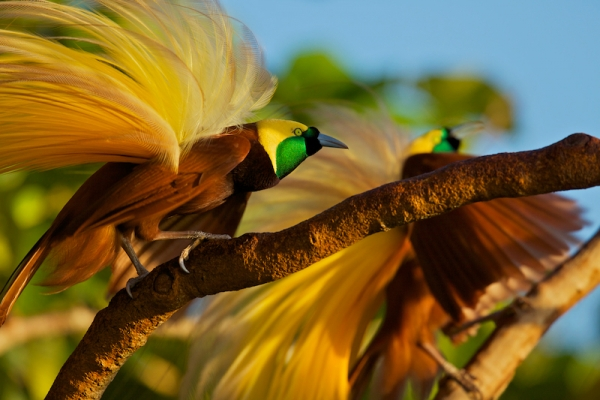 the magic of color 10 birds with most vivid plumage 10