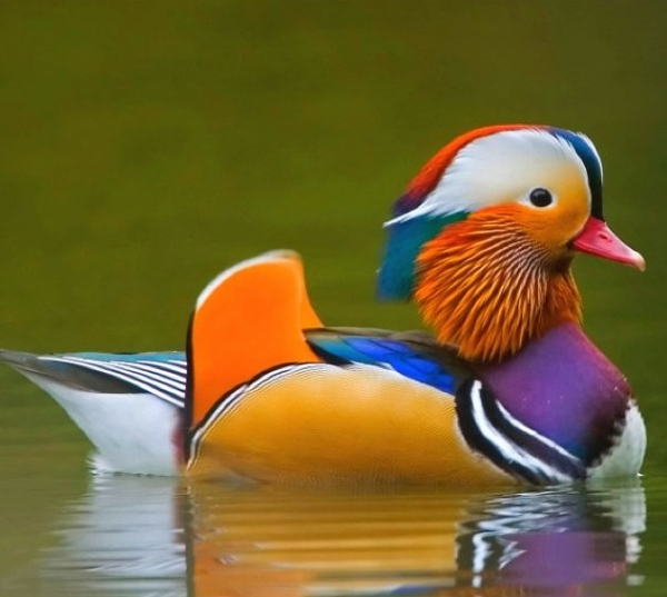 the magic of color 10 birds with most vivid plumage 11