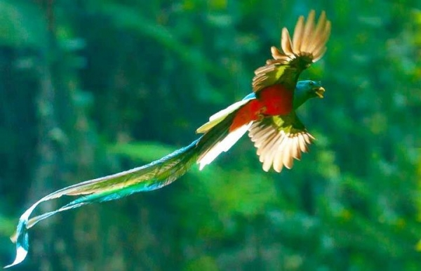 the magic of color 10 birds with most vivid plumage 2