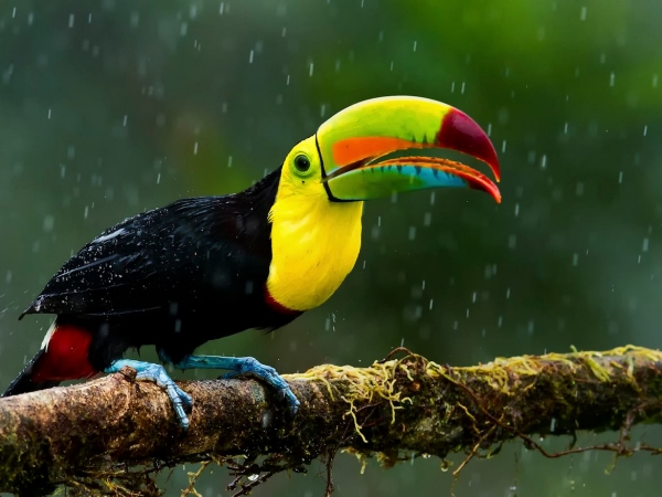 the magic of color 10 birds with most vivid plumage 3