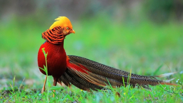 the magic of color 10 birds with most vivid plumage 5
