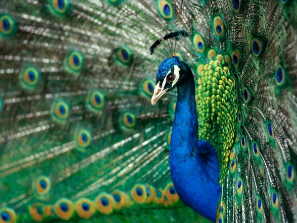 the magic of color 10 birds with most vivid plumage 6