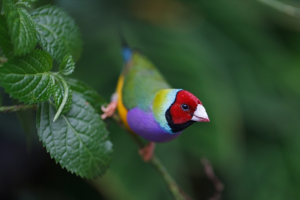 the magic of color 10 birds with most vivid plumage 8