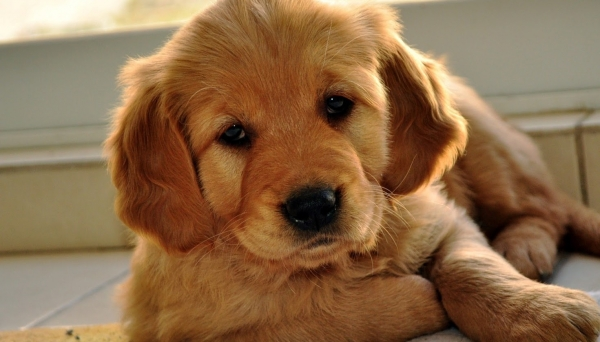 the most adorable dog mixes in the world 12 pictures 2