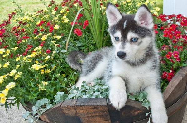 the most adorable dog mixes in the world 12 pictures 6