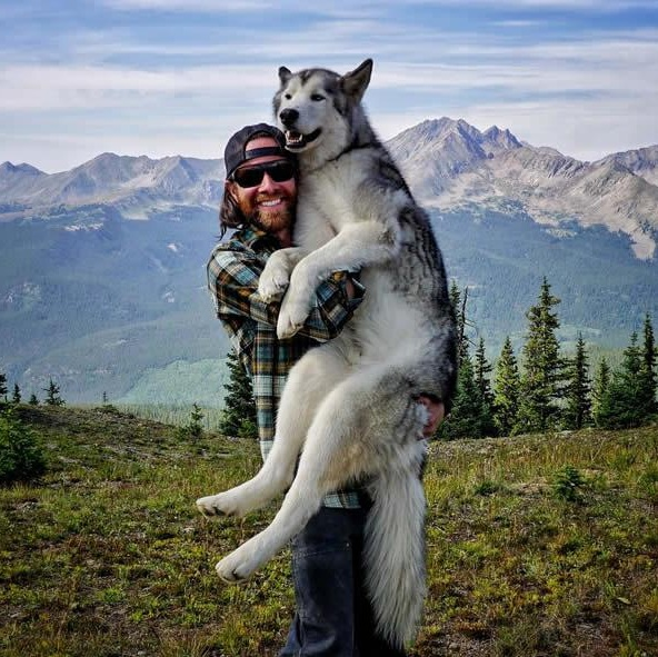 the most adventurous wolfdog loki 21 pictures 1