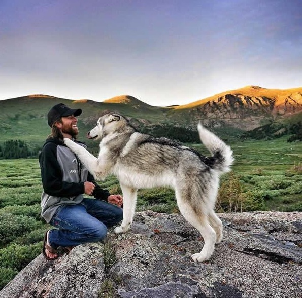 the most adventurous wolfdog loki 21 pictures 18