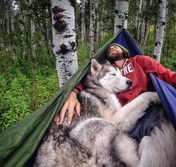 the most adventurous wolfdog loki 21 pictures 2
