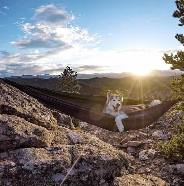 the most adventurous wolfdog loki 21 pictures 3