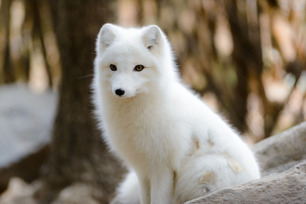 the most beautiful foxes of the world 10 pictures 6