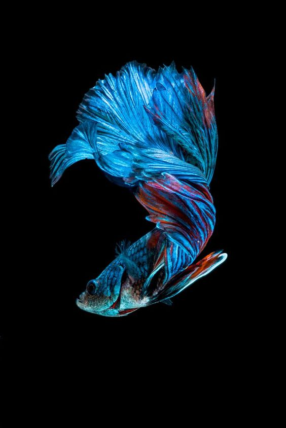 the most beautiful species of tropical fish 10 pictures 2
