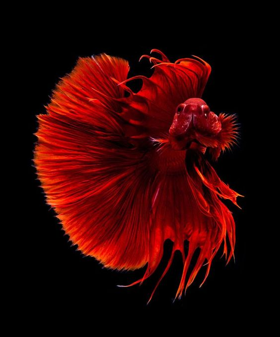 the most beautiful species of tropical fish 10 pictures 3