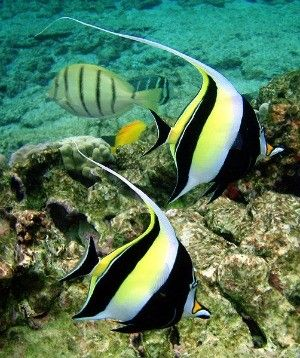 the most beautiful species of tropical fish 10 pictures 4