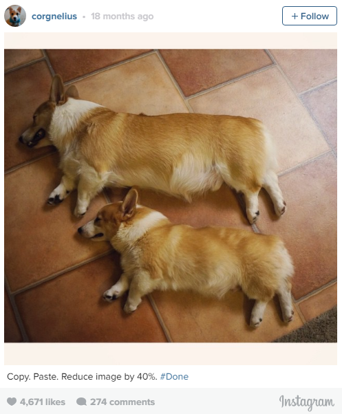 the most lovable dogs of instagram 11 pictures 10
