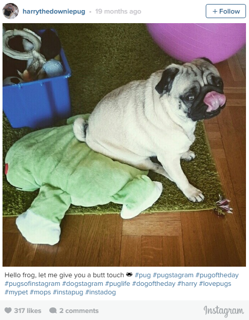 the most lovable dogs of instagram 11 pictures 4