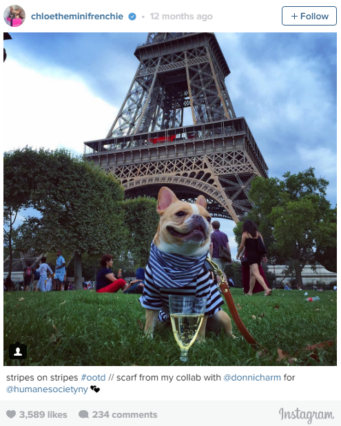 the most lovable dogs of instagram 11 pictures 5