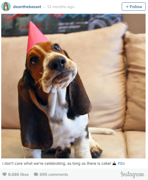 the most lovable dogs of instagram 11 pictures 6