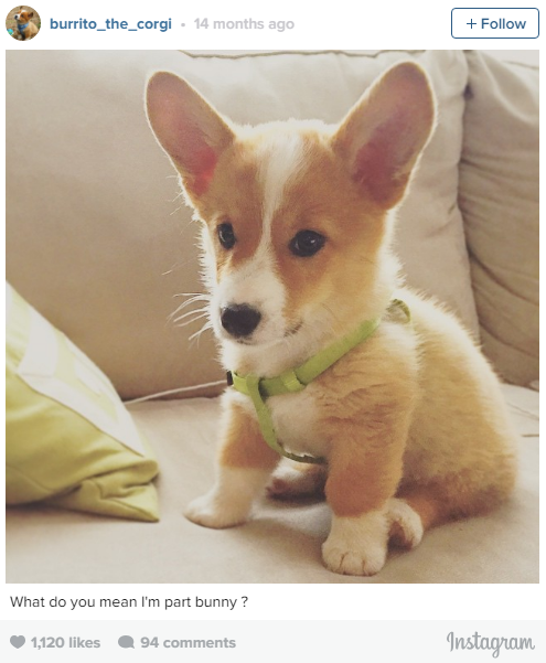 the most lovable dogs of instagram 11 pictures 7