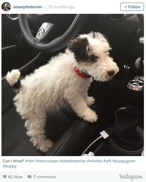the most lovable dogs of instagram 11 pictures 8