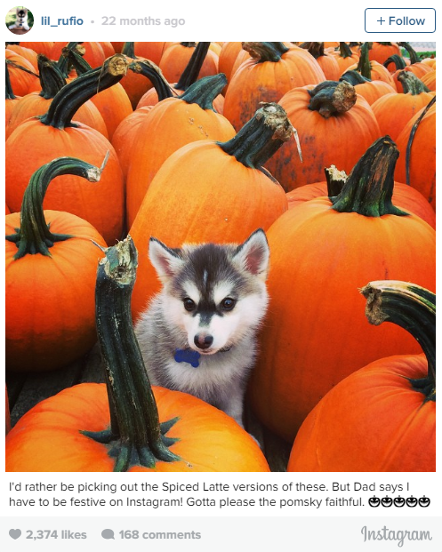 the most lovable dogs of instagram 11 pictures 9