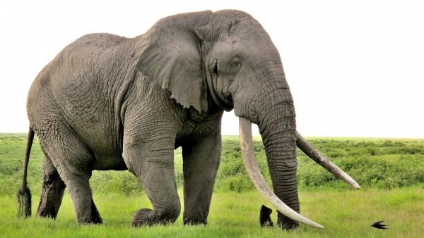 the most powerful wildlife 10 pictures 2