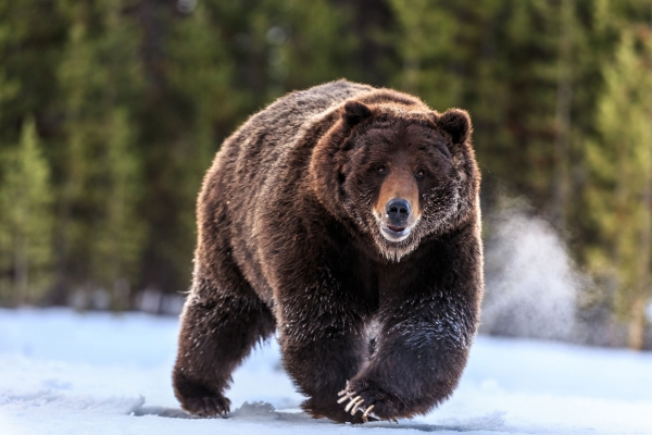 the most powerful wildlife 10 pictures 4