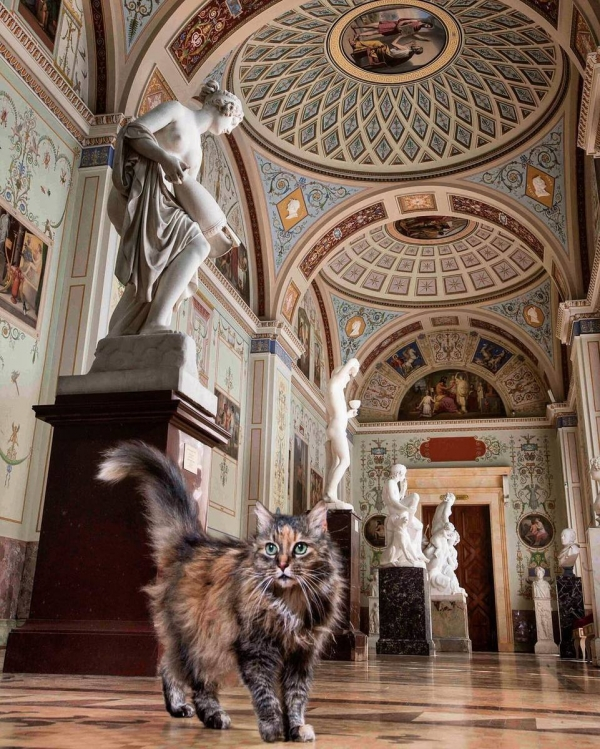 the museum where cats make rules 8 pictures 2 videos 3