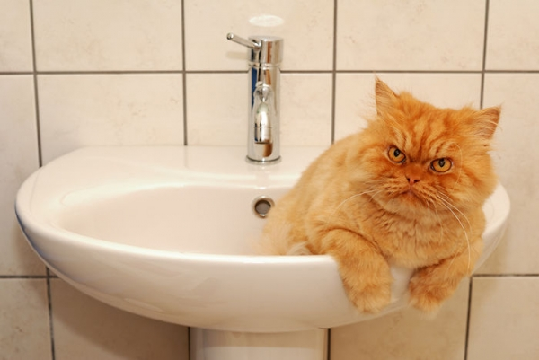 the popular grumpy cat now has some serious competition 19 pics 11